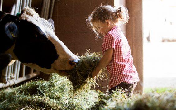 biobauernmarkt-mattigtalerhofkaeserei-kuh1-mid(c)